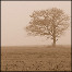 A solitary tree.