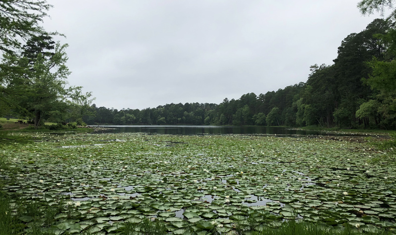 The lake...and lily pads.