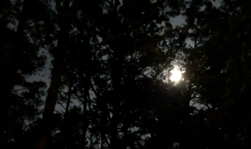 Moon breaking through trees.