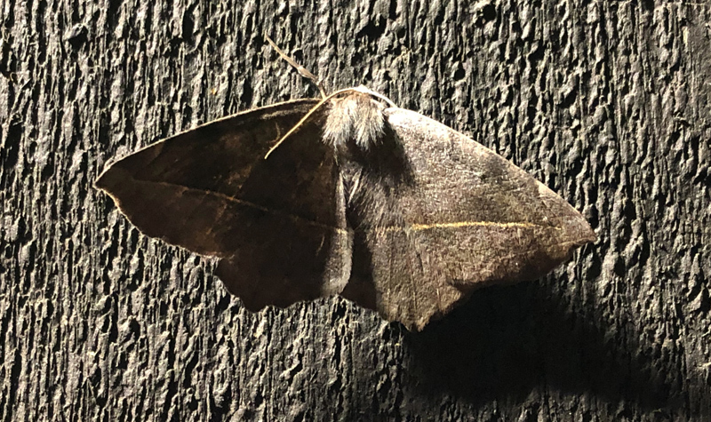 Moth photo.