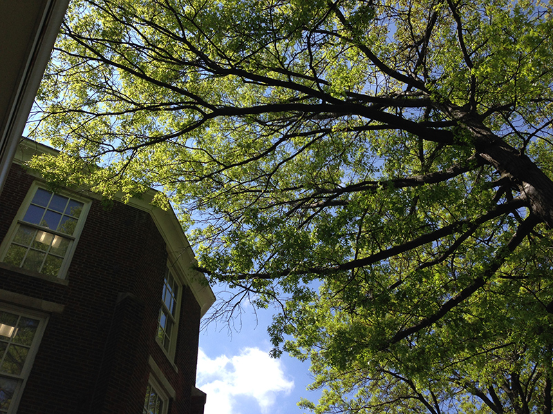 Blue sky, green trees, and a building on the Stephens College campus