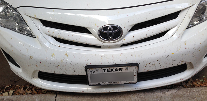 Front of my car covered in dead bugs