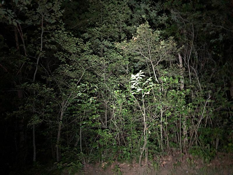 Flashlight against trees.