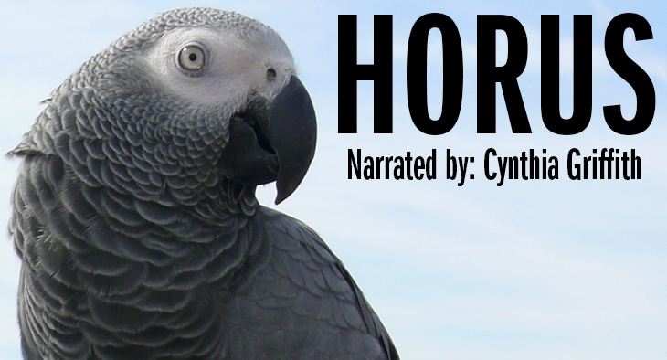African grey parrot: Horus - Narrated by Cynthia Griffith