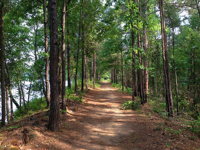 A long trail through the trees