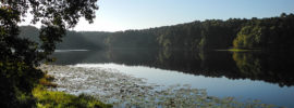 Daingerfield State Park in the morning