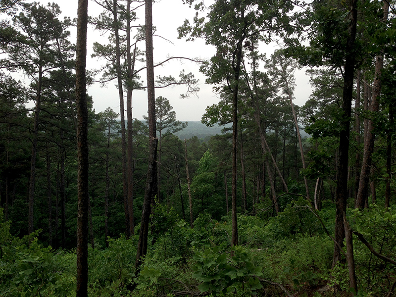Forest as far as the eye can see...