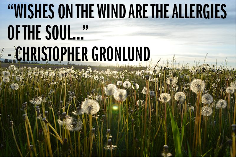 """Wishes on the wind are the allergies of the soul..."" - Christopher Gronlund"