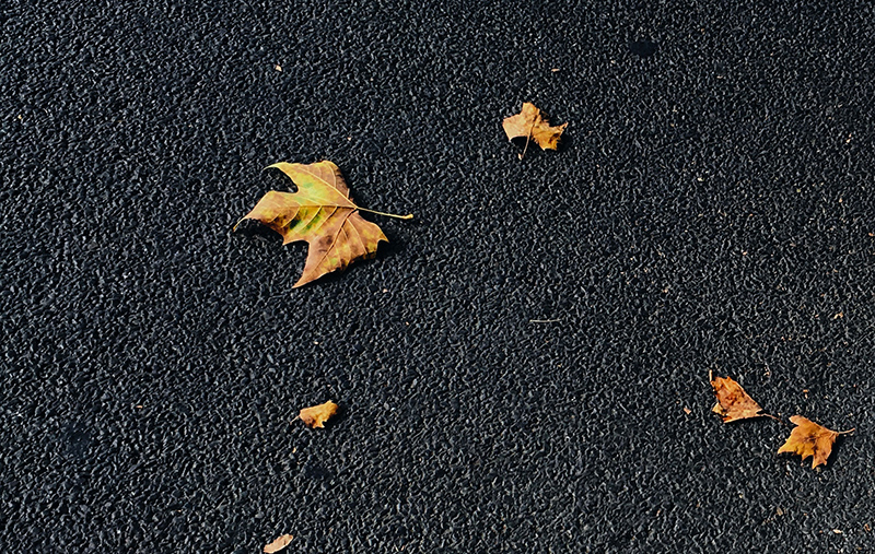 Fallen leaves on pavement
