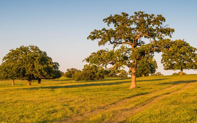 Pasture in Roanoke, Texas