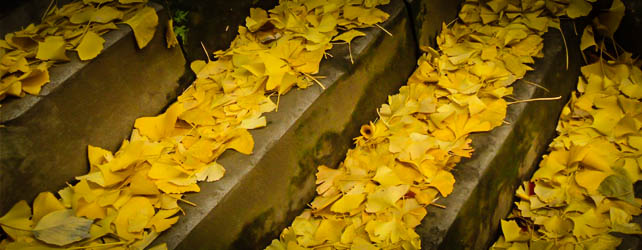 The Steps of Autumn